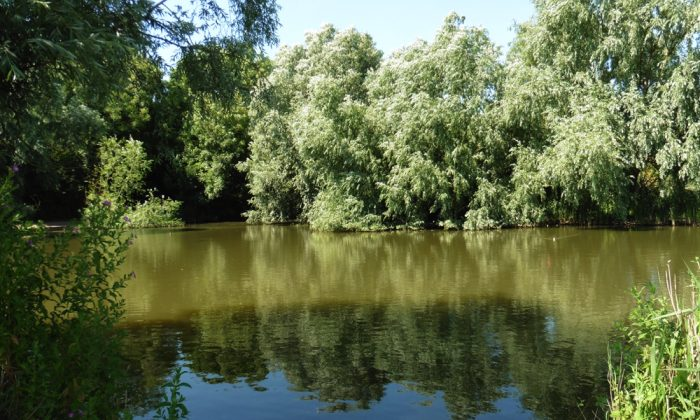 Ash tree pool - fenland fisheries - carp fishing