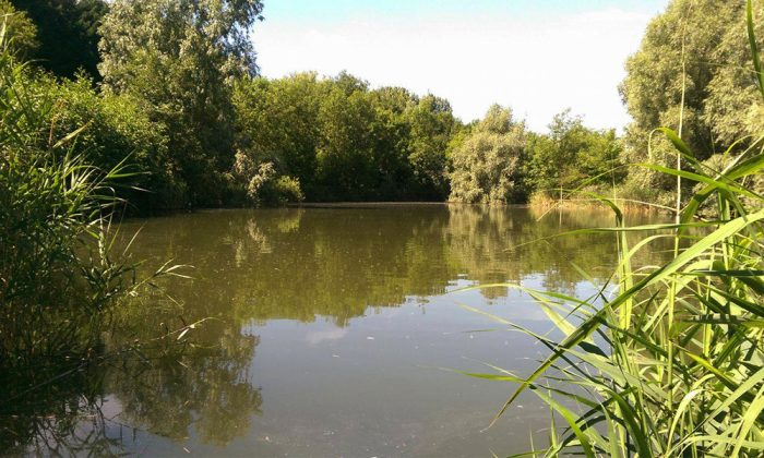 Vermuyden lake - Fenland Fisheries Carp Fishing