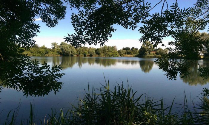 Willow lake - Fenland Fisheries Carp Fishing